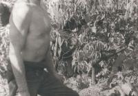Egy szekszárdi szüreten 1976-ban
